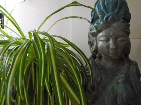 Asian Goddess and the Spider Plant