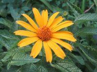 A Flower In My Garden