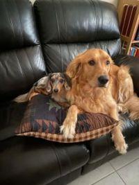 Zippy and Neville
