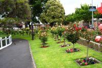 Lightheaded in the rose garden!