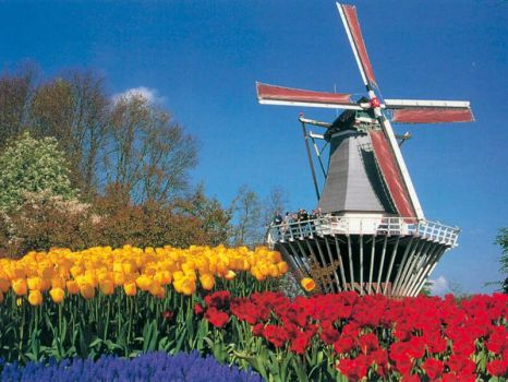 Moulin à vent et tulipes de Hollande