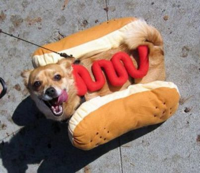 anyone for a hot dog
