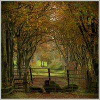 Autumn_Lane