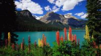 Amazing Landscapes (21)