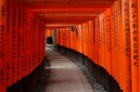 Torii at Fushimi Inari-taisha