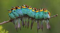Bird Huddle