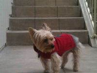 Arthurr in his Christmas Red Sweater