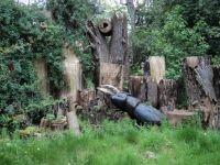 Wood Beetle Model, Kew Gardens