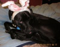 Now this is the real Easter Bunny.  No Really!
