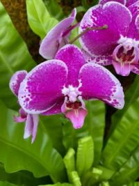 annual orchid show at the New York Botanical Garden 10