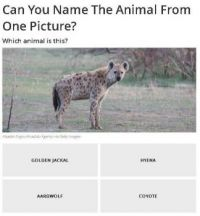 Can you name the animal? #25 of 40