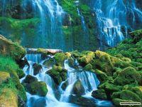Willamette National Forest, Oregon  5518
