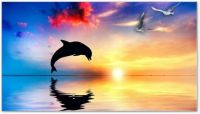 Dolphin_Sunset_full