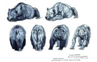 terryl whitlatch bear anatomy
