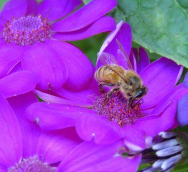 Purple Daisy and Bee..