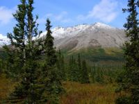 Alaskan Landscape #1