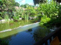 Bandara Resort, Thailand: Pond