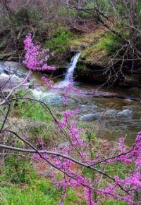 Reduds on Troublesome Creek, Eastern Kentucky