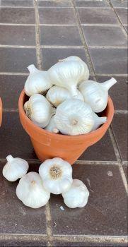 Artichoke Garlic