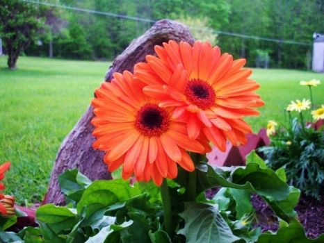 Beautiful Orange Flower