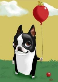 Boston Terrier-Brian Rubenacker