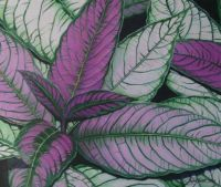 054 - Purple and Green Leaves