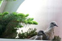 balkonoví nájemnci