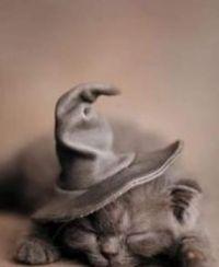 Sleeping Kitten in Witch Hat