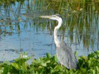 Florida Wetlands in Orlando