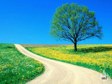 Spring_Road_1024
