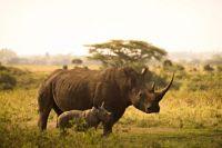 rhino-6065480_1920