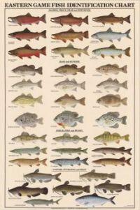 Gamefish Identification Chart