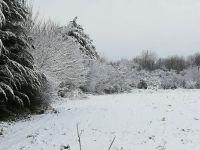 Snowy Detling