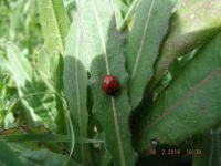 lovely ladybug 2