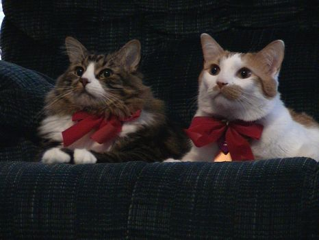 X-mas Kitties
