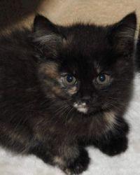 Foster kitten #5