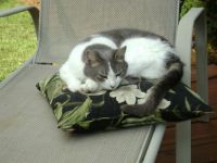 Suki loves pillows