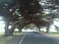 Road to Seaspray, Victoria, Australia