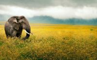 Elephants_wallpaper