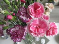 Mixed carnations on my coffee table.