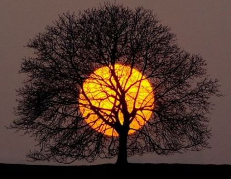 Harvest Moon through Tree