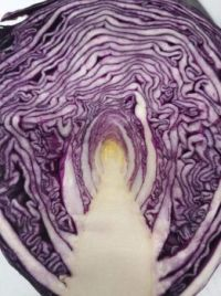 Walk the path of cabbage