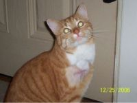 SHAFFER, MY CAT