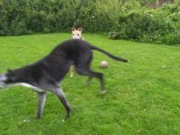 Winnie (13) teaching Doc to play. Then you jump . .