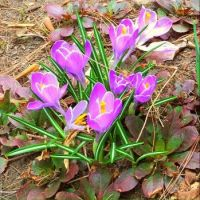 The first flowers of spring.