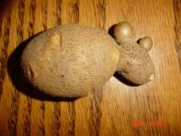 Homegrown potato that looks like a mouse