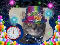 Pal wishes everyone a Happy New Year