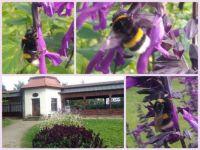 Castle bowling alley and bumblebee  -  Zámecká kuželna a čmelák
