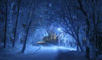 Zauberhafter Winterwald