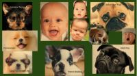 PAGE of baby and baby poopie faces - 03-16-20thxPEXELS